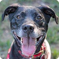 Adopt A Pet :: Sarah - Reisterstown, MD