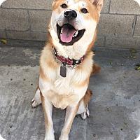 Adopt A Pet :: Dustin - Fullerton, CA