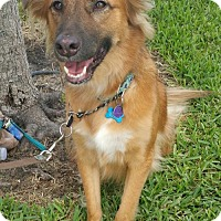 Adopt A Pet :: Sly - Royal Palm Beach, FL
