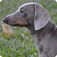 Adopt A Pet :: Witten Winesap - Houston, TX