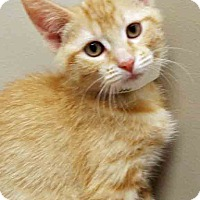 Adopt A Pet :: McGuyver - Plainfield, IL