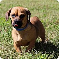 Adopt A Pet :: Jim bop - Waldorf, MD