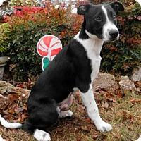 Adopt A Pet :: Nash - Tyler, TX