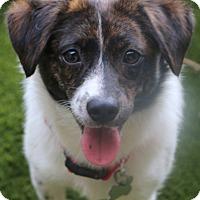 Adopt A Pet :: Parsnip..meet me - Woonsocket, RI