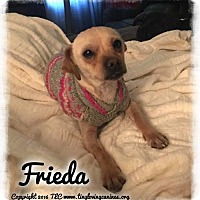 Adopt A Pet :: Frieda - Simi Valley, CA
