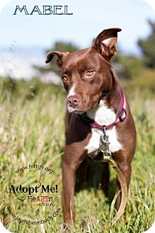 Retriever (Unknown Type)/Border Collie Mix Dog for adoption in San Francisco, California - Mabel