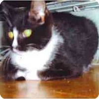 Adopt A Pet :: Oreo - Bristol, RI