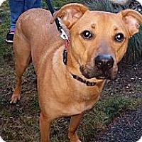 Adopt A Pet :: Max - Puyallup, WA