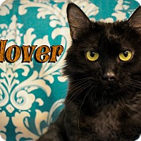 Adopt A Pet :: Glover - Tempe, AZ