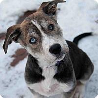 Adopt A Pet :: Nora - Caledon, ON