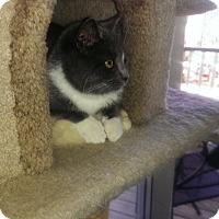 Adopt A Pet :: Cypress - Alexandria, VA