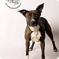 Adopt A Pet :: Polly - Apache Junction, AZ