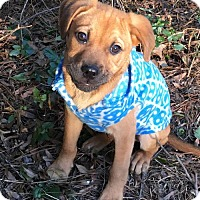 Adopt A Pet :: Kenickie - Holly Springs, NC