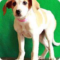 Adopt A Pet :: Mars - Waldorf, MD