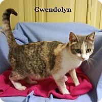 Adopt A Pet :: Gwendolyn - Bentonville, AR