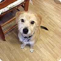 Adopt A Pet :: Harley - Groton, MA
