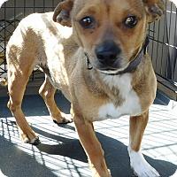 Adopt A Pet :: Tony - MINNEAPOLIS, KS