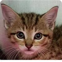 Adopt A Pet :: Melissa - Springdale, AR