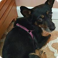 Adopt A Pet :: Cassady - Andalusia, PA