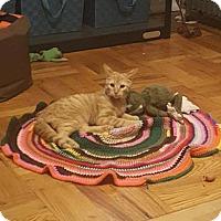 Adopt A Pet :: Jonathan Taylor Thomas aka JTT - New York, NY