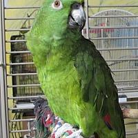 Adopt A Pet :: Babs - Edgerton, WI