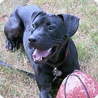 Adopt A Pet :: Hudson - Worcester, MA