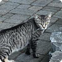 Adopt A Pet :: Gracie - Lancaster, PA