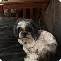 Adopt A Pet :: Jack - Healdsburg, CA
