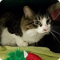 Adopt A Pet :: Porky - Elyria, OH