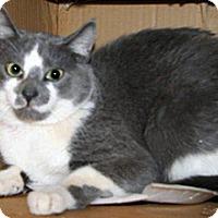 Adopt A Pet :: Eddie - Wildomar, CA