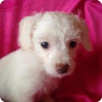 Adopt A Pet :: Daisy - Carlsbad, CA