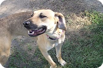 Hound (Unknown Type) Mix Dog for adoption in Lake Odessa, Michigan - Serena
