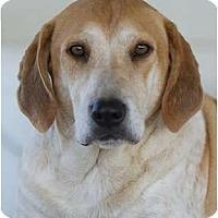 Adopt A Pet :: Petey - Providence, RI