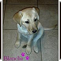 Adopt A Pet :: Blanche - Silsbee, TX