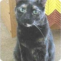 Adopt A Pet :: Persia - Mesa, AZ