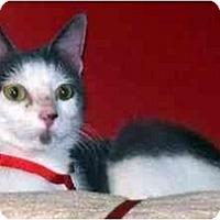 Adopt A Pet :: Rapunzel - Alexandria, VA