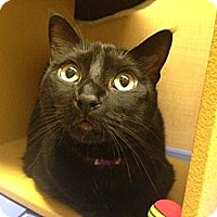 Adopt A Pet :: Sadie - Foothill Ranch, CA