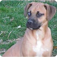 Adopt A Pet :: Boone - Providence, RI