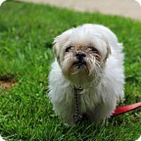 Adopt A Pet :: Eencie Weencie - Tinton Falls, NJ