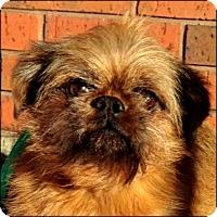 Adopt A Pet :: REGGIE in Wichita, KS. - Seymour, MO