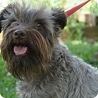 Adopt A Pet :: Punkin - Staunton, VA