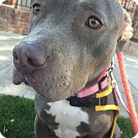 Adopt A Pet :: Vida - Los Angeles, CA