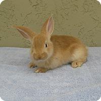 Adopt A Pet :: Trip - Bonita, CA
