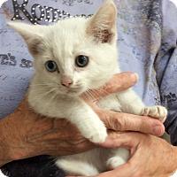 Adopt A Pet :: Jelisa - Kelso/Longview, WA