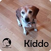 Adopt A Pet :: Kiddo - Pittsburgh, PA