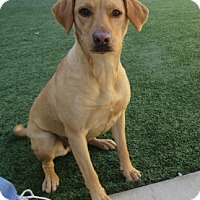 Adopt A Pet :: Tinsel - Bedford, TX