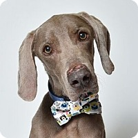Adopt A Pet :: *Tanner - Birmingham, AL
