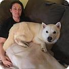 Adopt A Pet :: Smokey - Adoption Pending - Congrats John & Carol!
