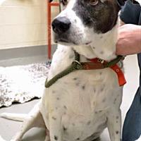 Adopt A Pet :: Harley - Troy, MI