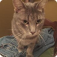 Adopt A Pet :: Fred - Monroe, GA